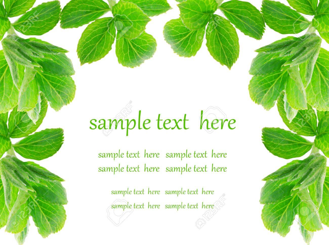 green leaves on white background Stock Photo - 9988238