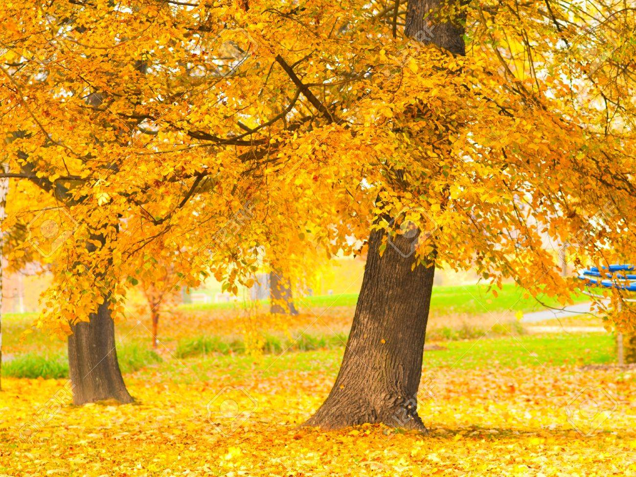 fall leaves trees Stock Photo - 10204021