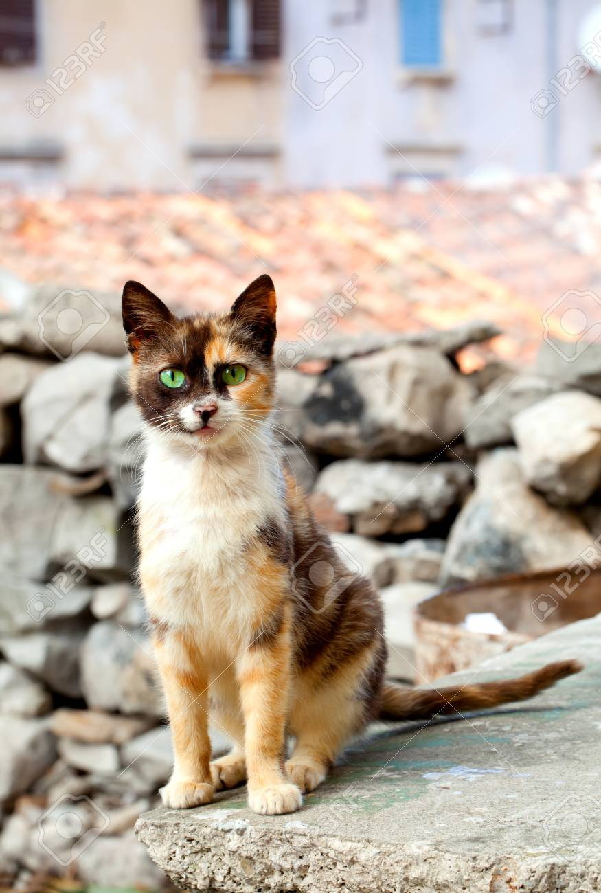 cat with green eyes Stock Photo - 16574605