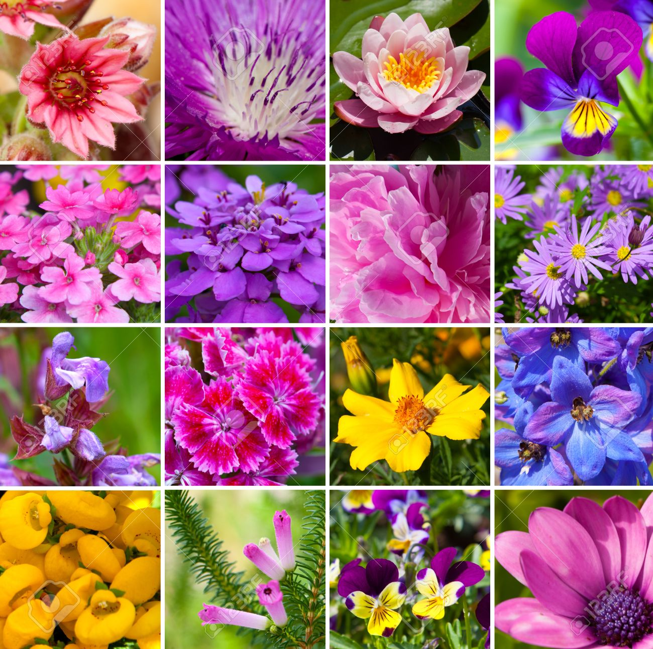 Flowers Different Kinds Of Flowers