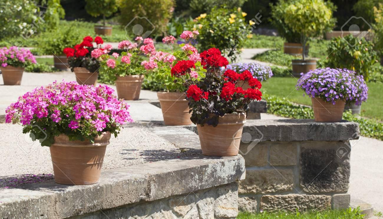 Géranium et jardin fleuri construit en terrasse