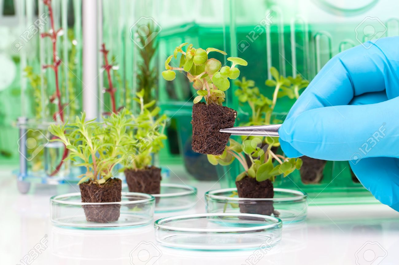 image showing a person's hands in blue rubber glove holding a small leafy plant with tweezers next tn the laboratory - 57609879