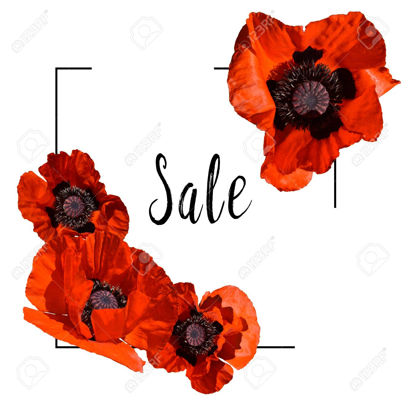 Square Sale Frame Decorated With Beautiful Red Poppies In Bloom