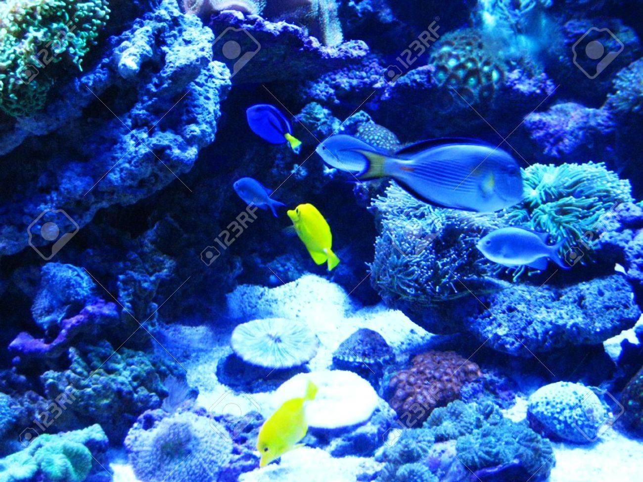 Beautiful fish near corals in the deep blue sea Stock Photo - 8862703