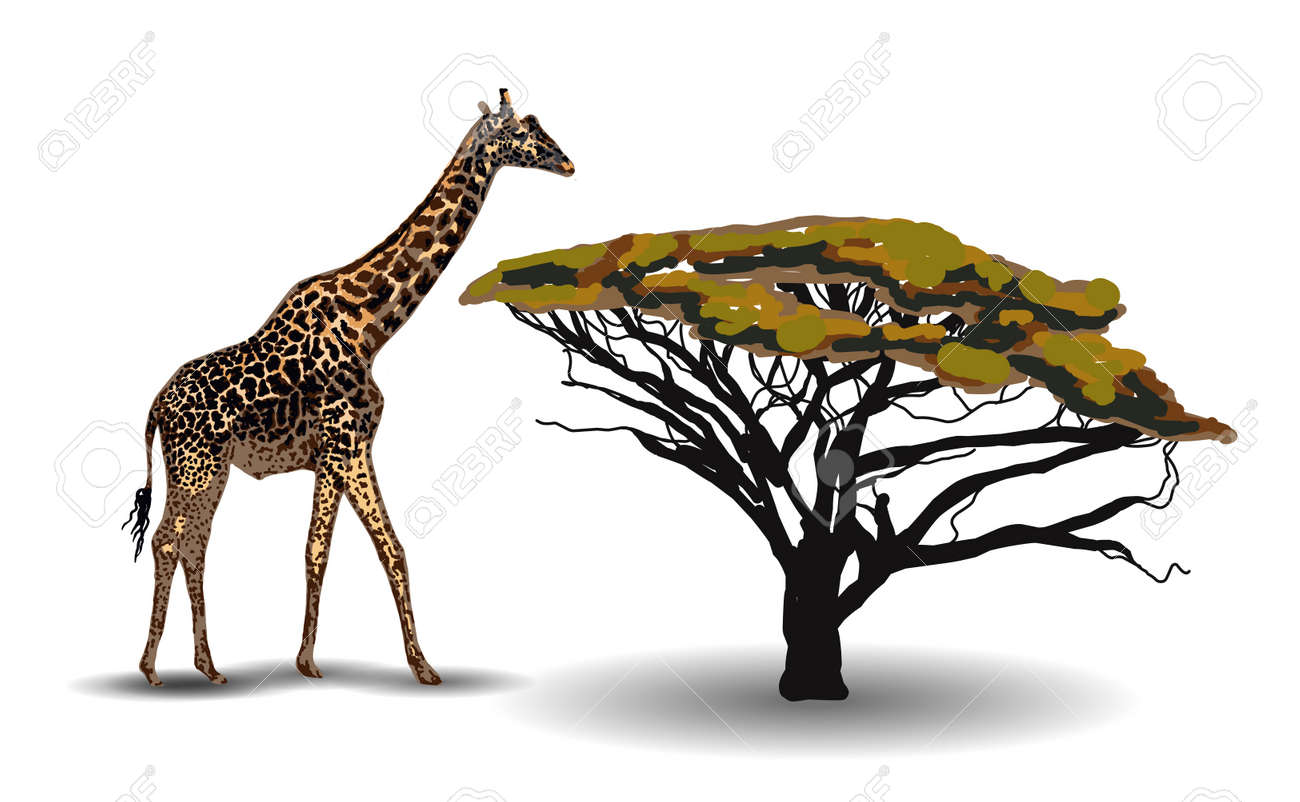 ETHNIC TREND. PAINTING IN AFRICAN STYLE. giraffe in the savannah. African animal isolated on white background. Vector illustration. - 168195255