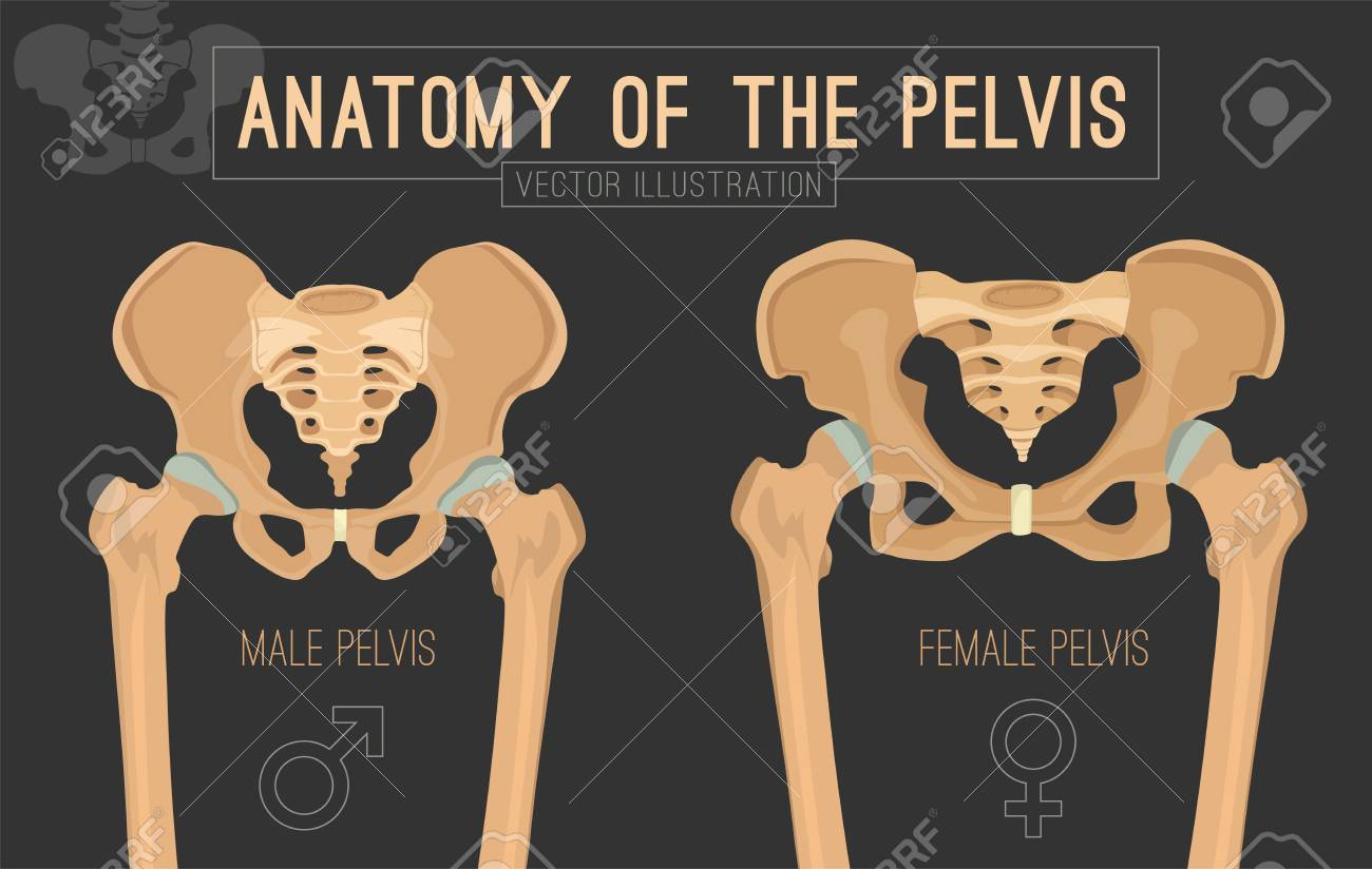 Male vs female pelvis. Main differences. Detailed vector illustration isolated on a dark grey background. Medical and anatomical concept. - 100029795
