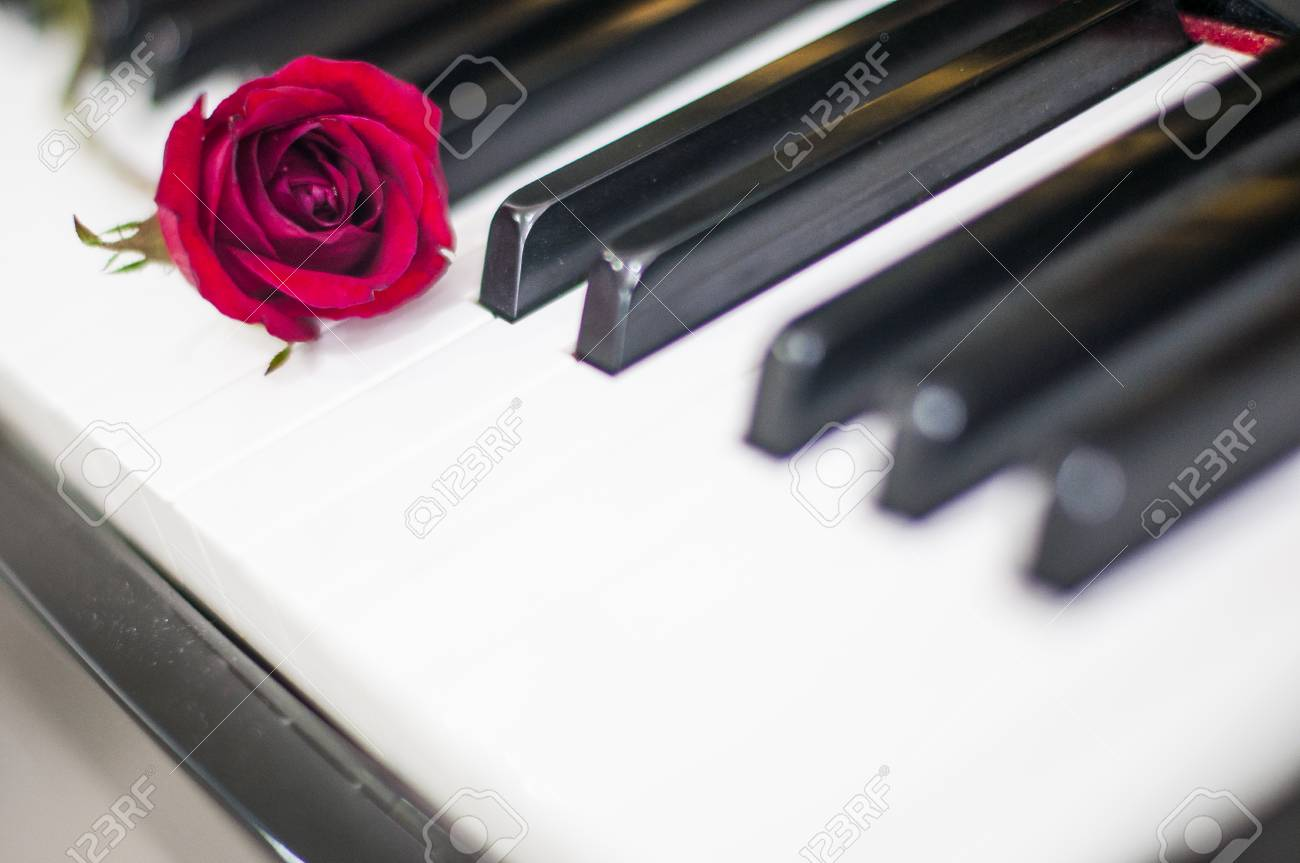 Valentines Day Red Rose On Piano Keyboard Blurred Background Stock Photo Picture And Royalty Free Image Image 71726965