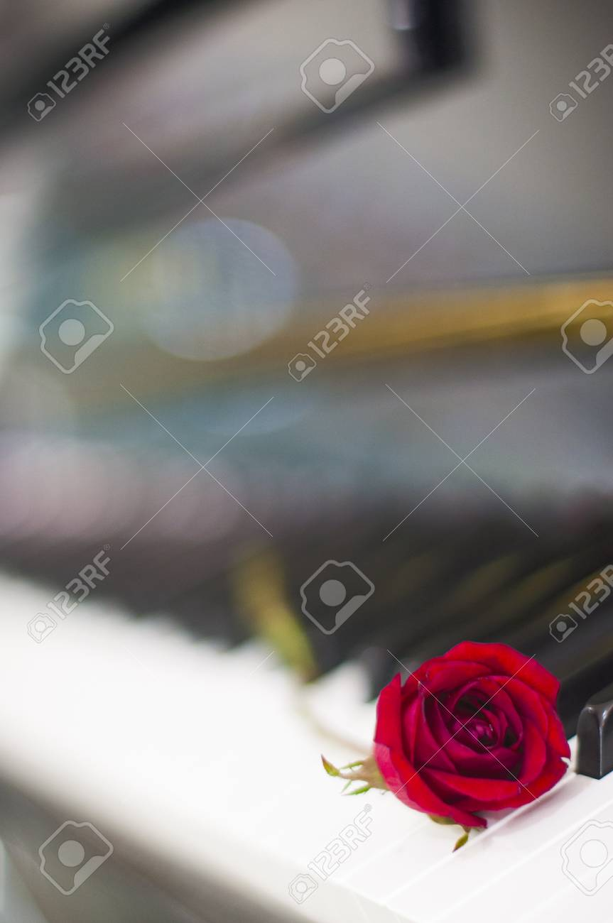 Valentines Day Red Rose On Piano Keyboard Blurred Background Stock Photo Picture And Royalty Free Image Image 71979950