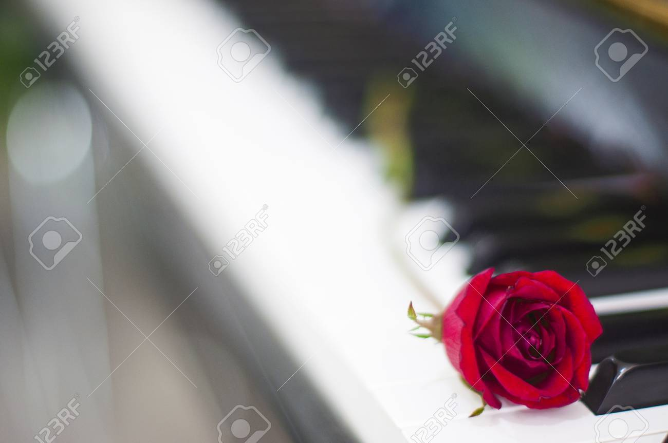 Valentines Day Red Rose On Piano Keyboard Blurred Background Stock Photo Picture And Royalty Free Image Image 71924122