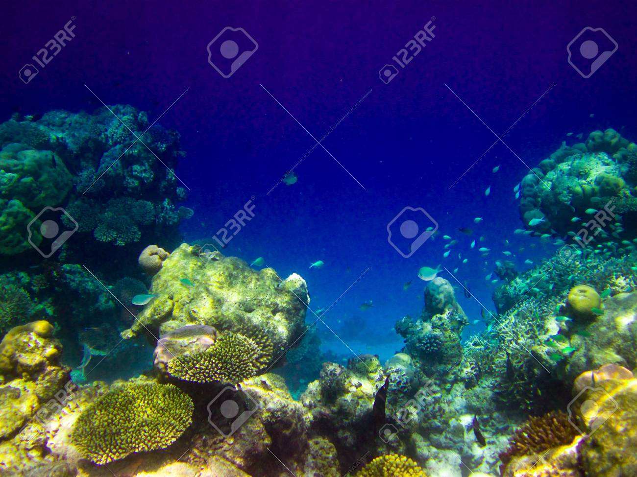 under water world at Maldives blue clear sea Stock Photo - 5884996