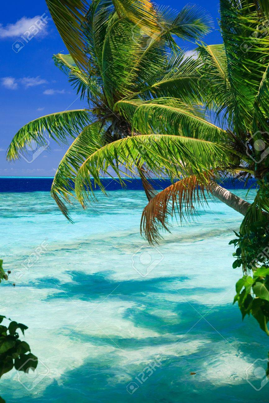 Tropical Paradise at Maldives with palms and blue sky Stock Photo - 7049394