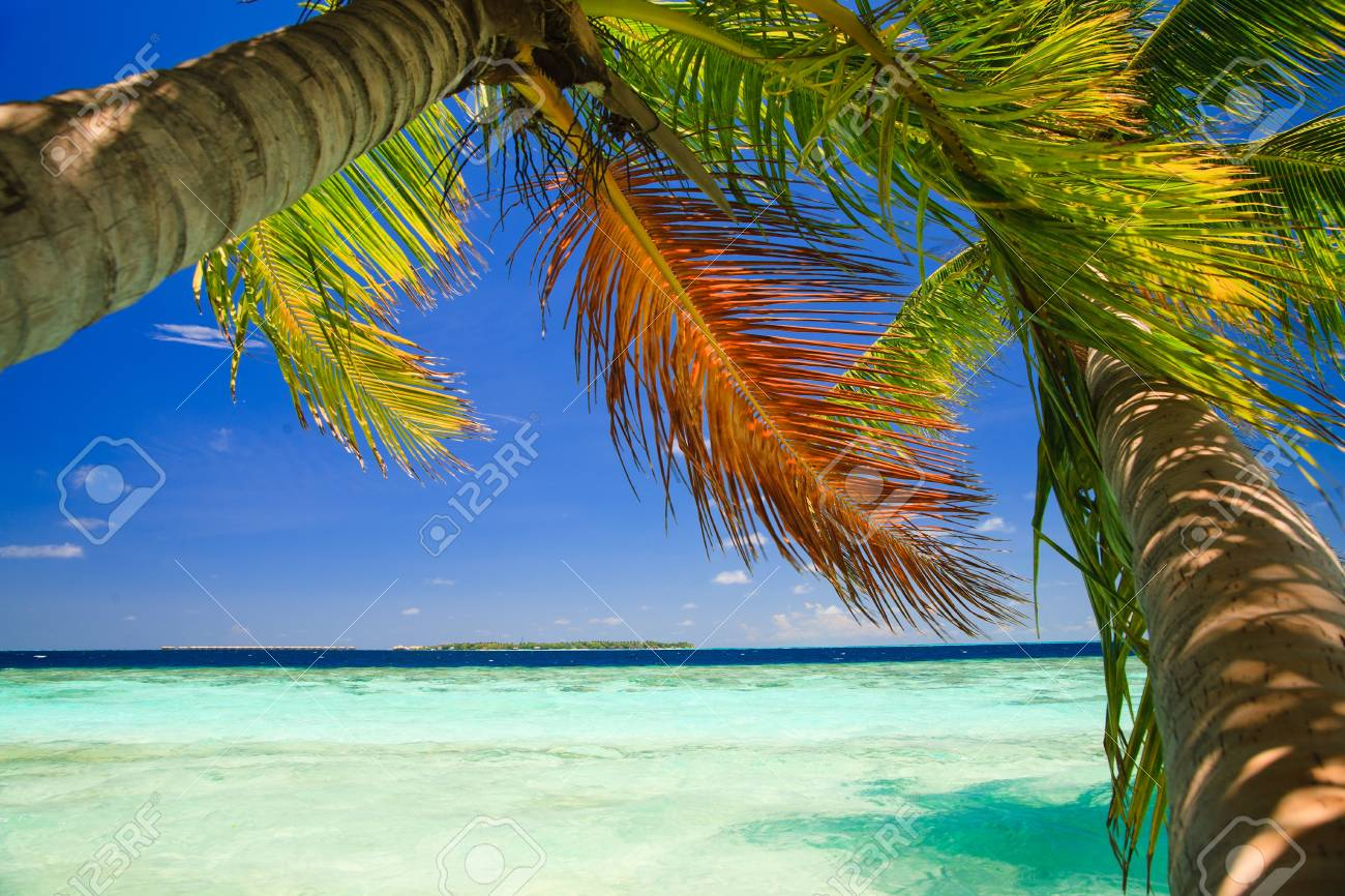 Tropical Paradise at Maldives with palms and blue sky Stock Photo - 8071367