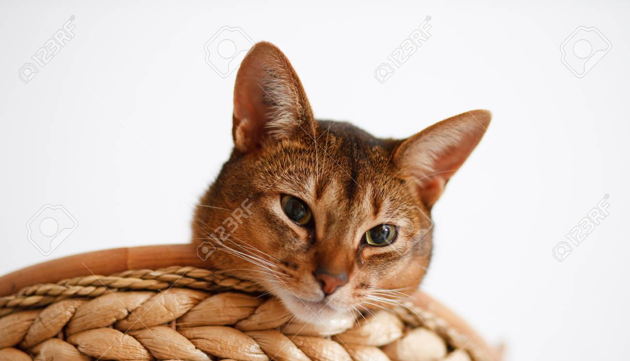 Photo of a race cat Stock Photo - 14317782