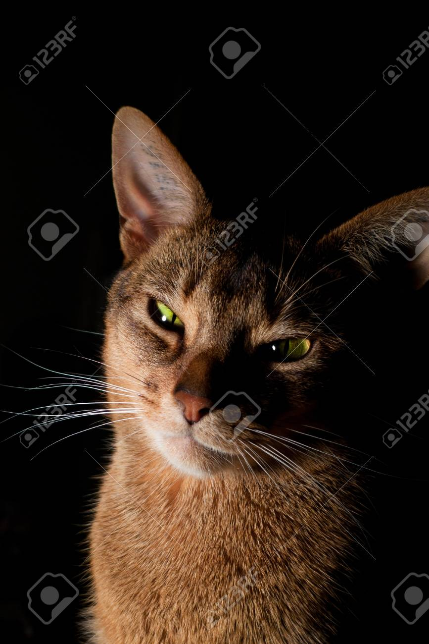 Photo of a race cat Stock Photo - 14317802