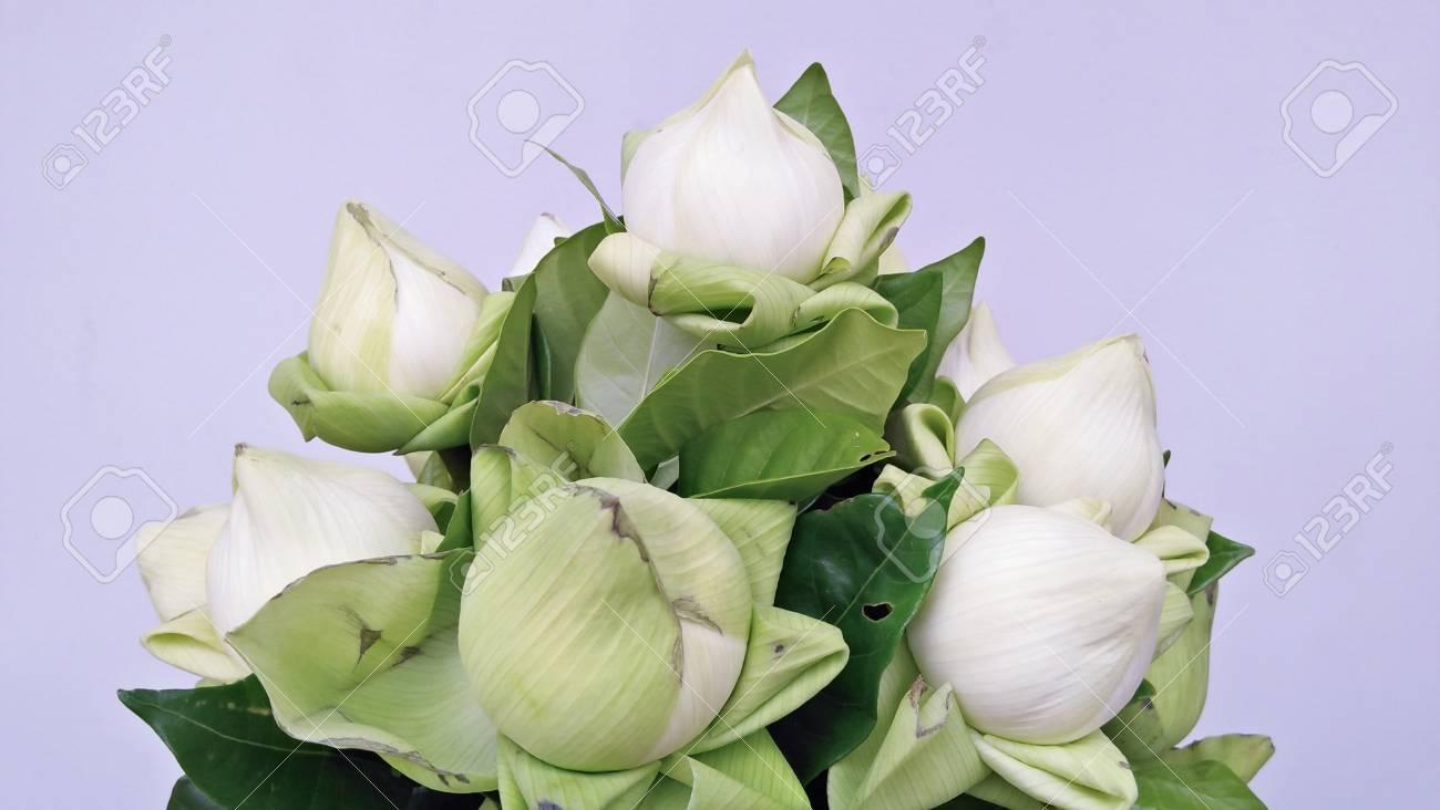 White lotus flower on white background white lotus flower stock stock photo white lotus flower on white background white lotus flower izmirmasajfo