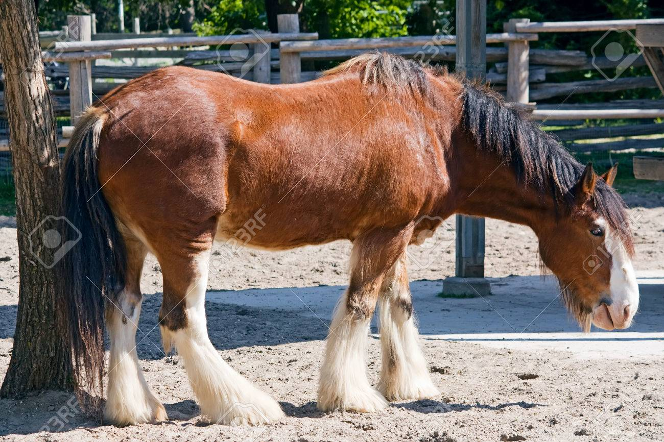 Portrait Of An Old Brown Horse On A Farm Stock Photo Picture And Royalty Free Image Image 29651944