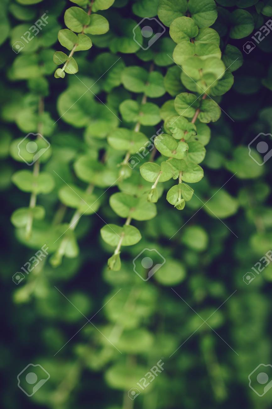 Beautiful fairy dreamy magic light yellow green leaves foliage in retro vintage style effect, soft selective focus, blurry background, copyspace for text - 62394115