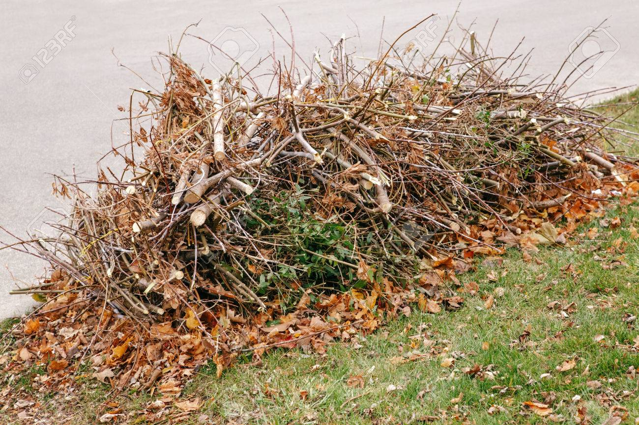 Pile of cut old dry tree branches with autumn fall leaves on them, waste garbage trash on ground, background texture - 62648039