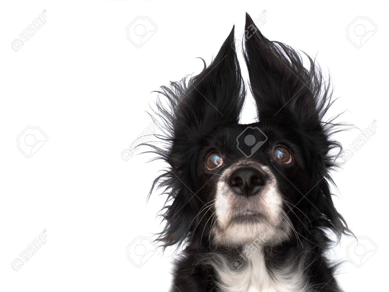 this is a black dog on a white background Stock Photo - 563108