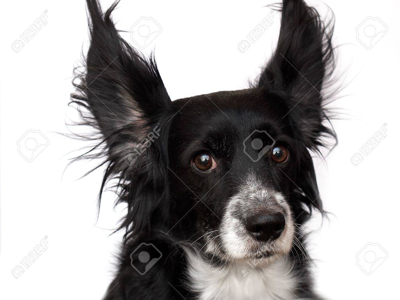 this is a black dog on a white background Stock Photo - 563107