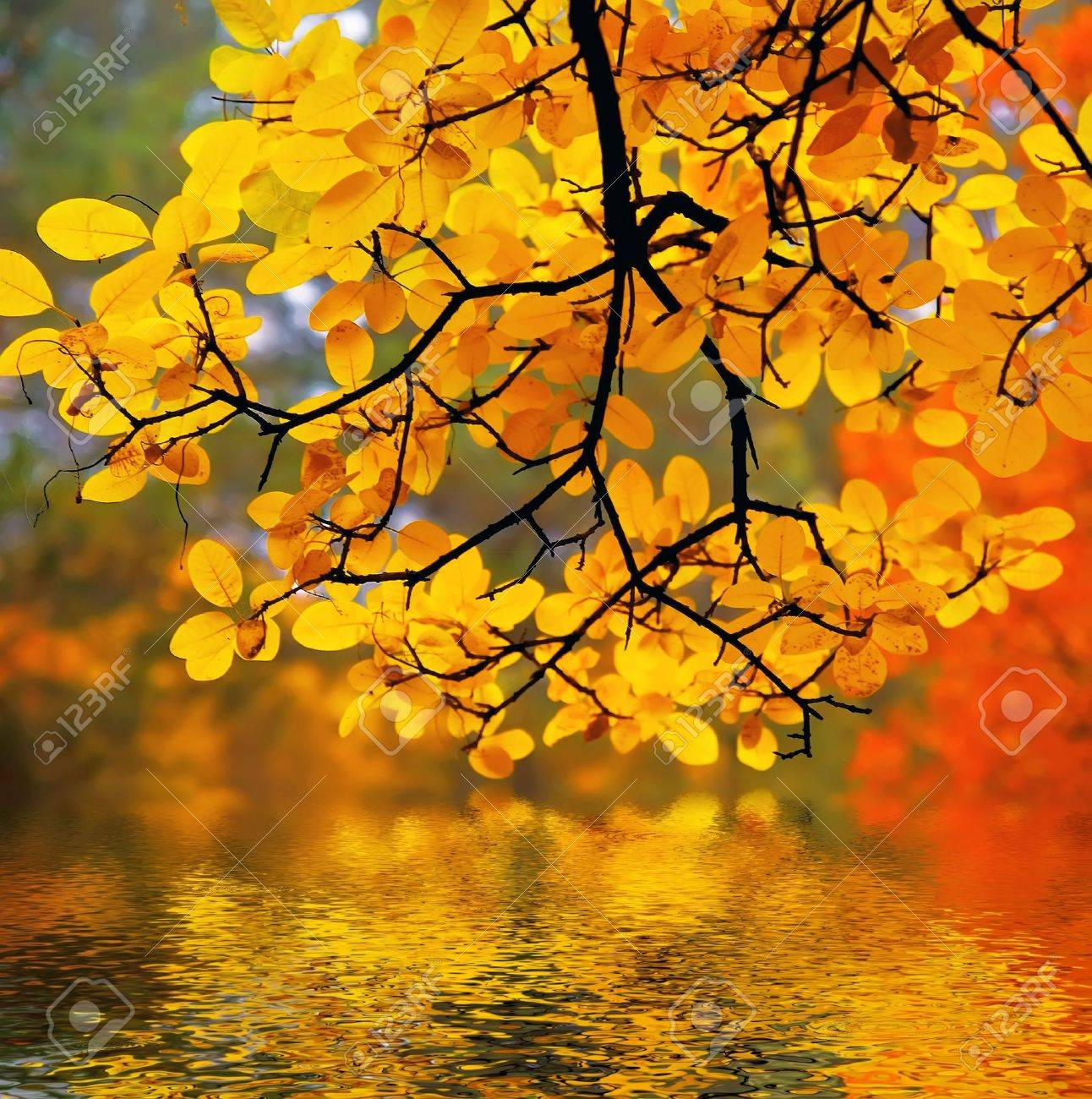 In this photo the beautiful autumn wood is shown Stock Photo - 643820