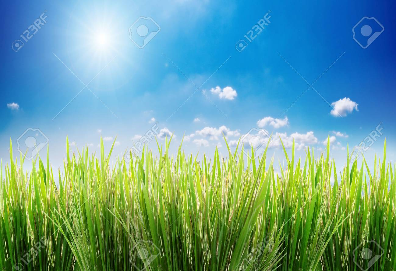 green grass on a sky background Stock Photo - 883226