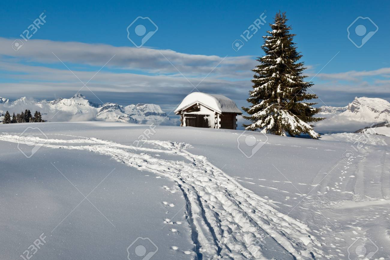 Small Hut and Fir Tree on the Top of the Mountain in French Alps Stock Photo - 12461226