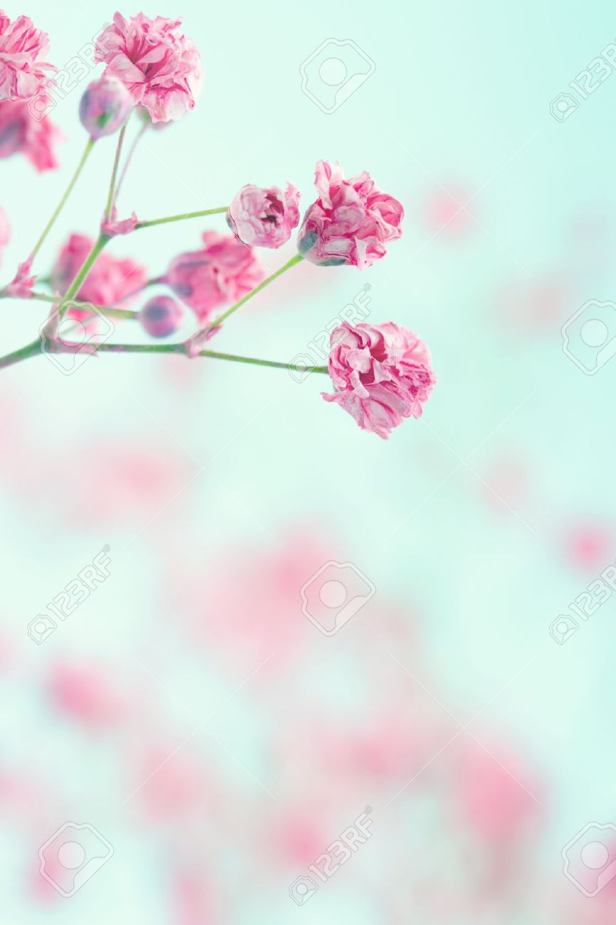 Pink Babys Breath Flowers On Light Blue Pastel Shabby Chic Textured