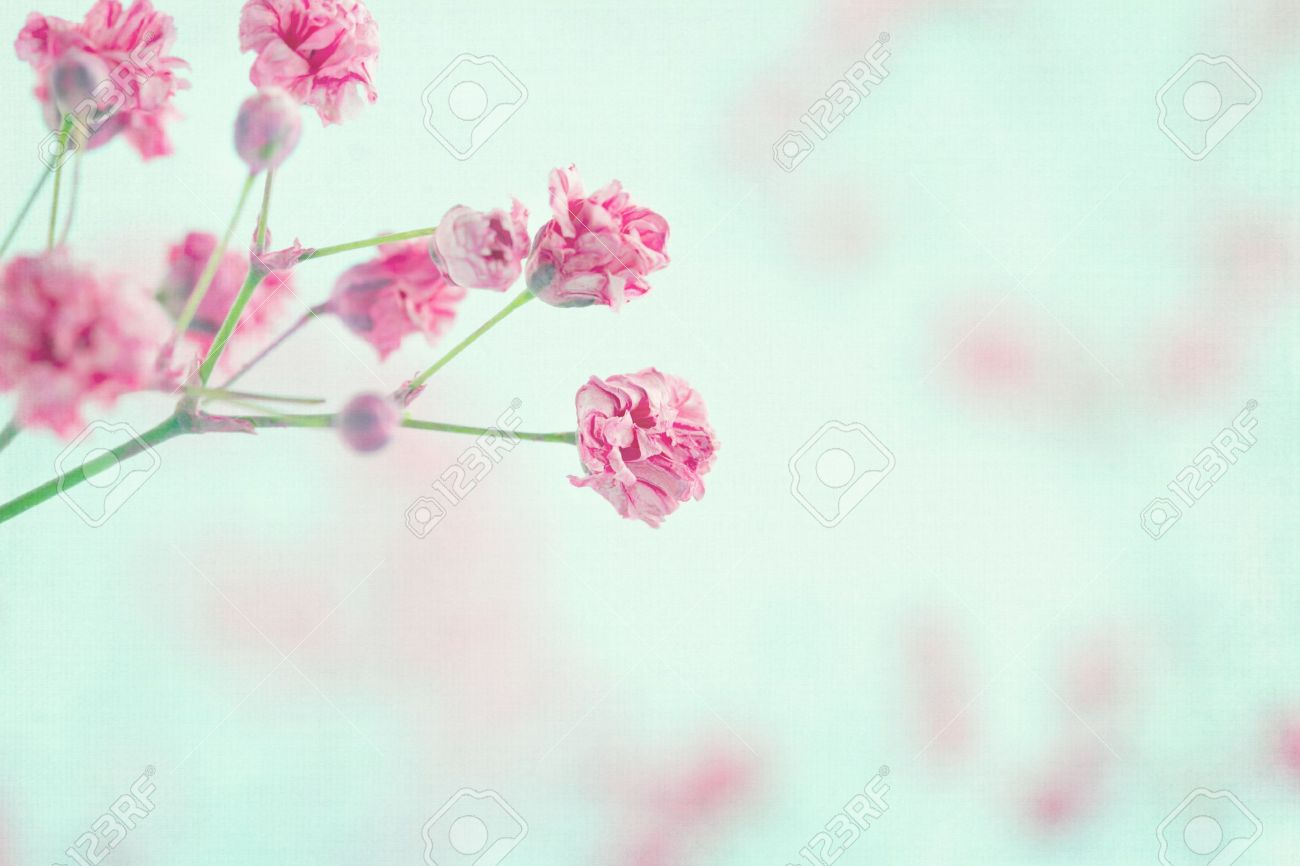 Pink Baby's Breath Flowers On Light Blue Pastel Shabby Chic ...