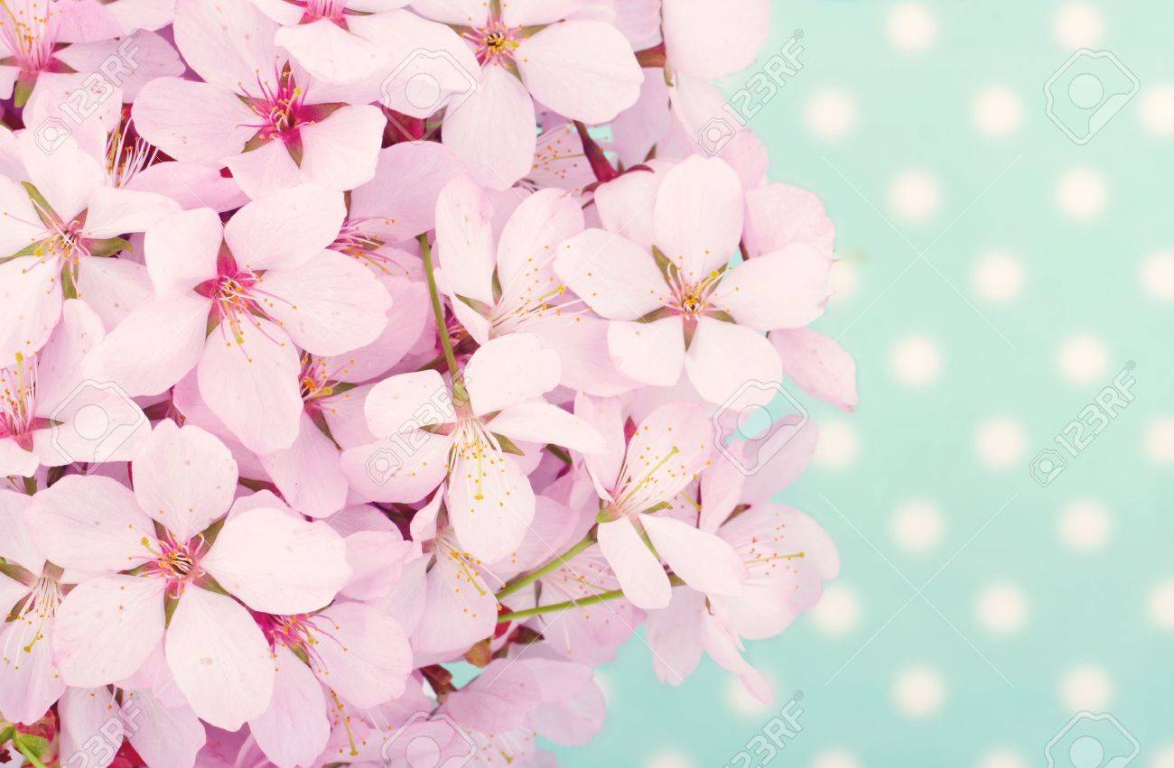 Pink Cherry Blossom Flower Bouquet On Light Blue Vintage Polkadot ...