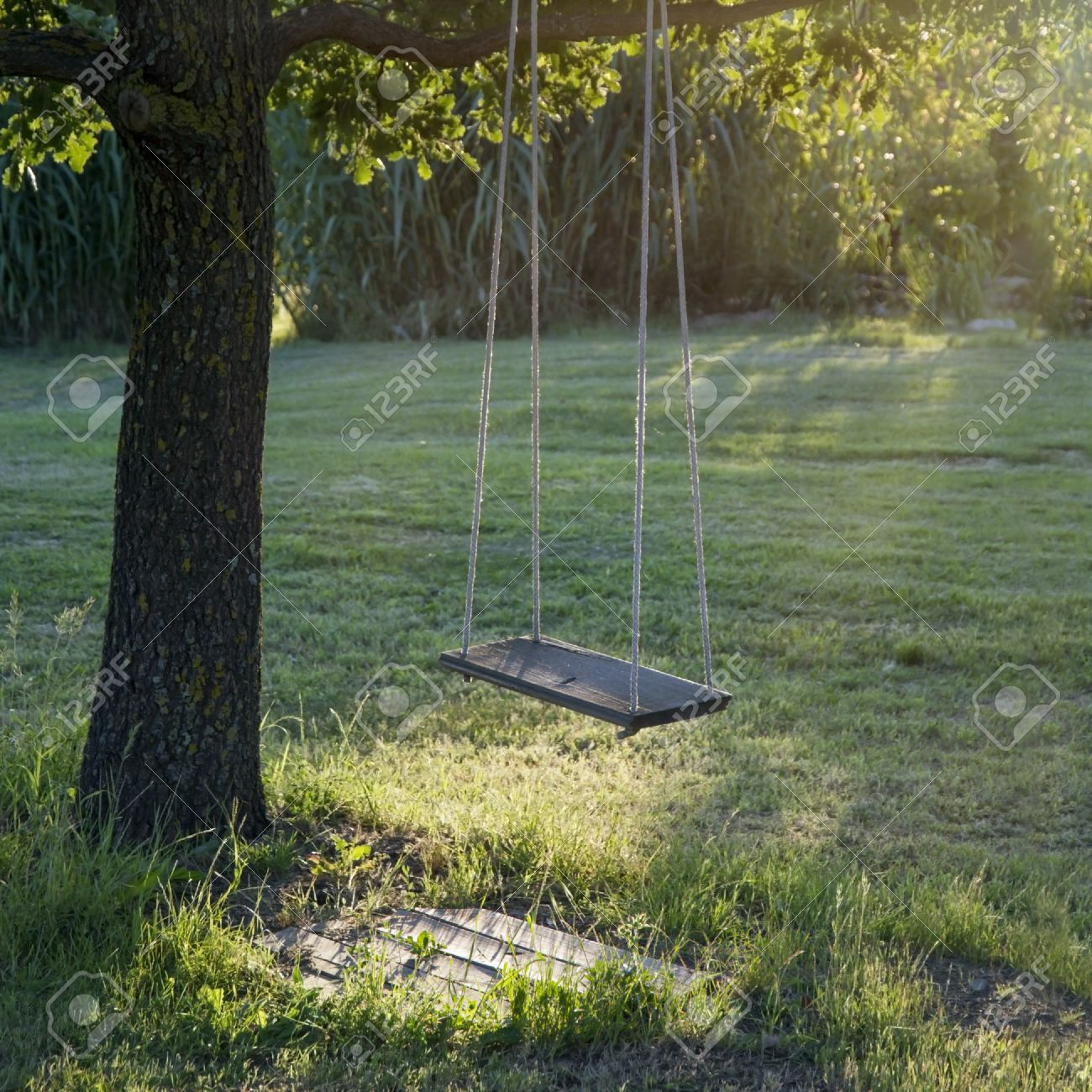 a12dc69fc1 Old wooden vintage garden swing hanging from a large tree on green grass  background