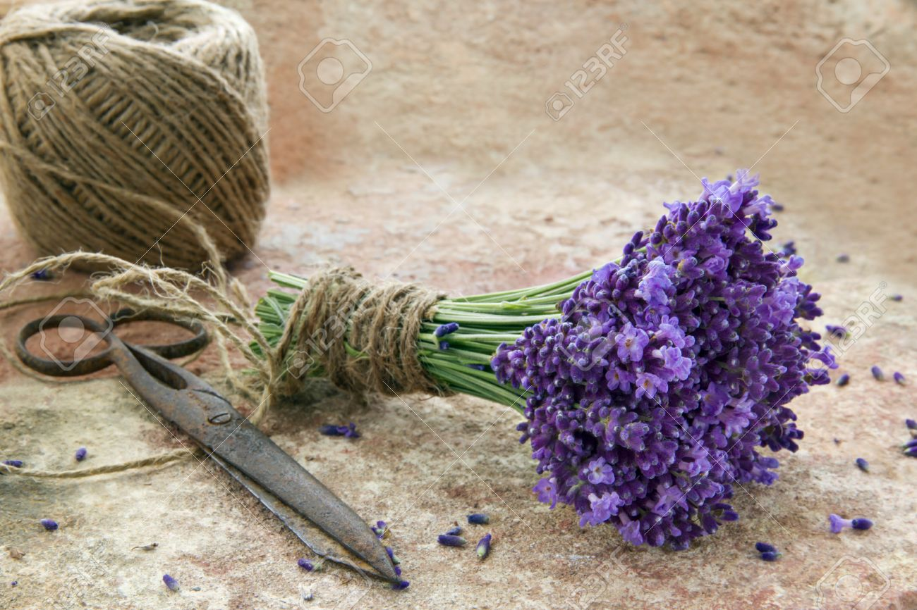 Bouquet Of Fresh Purple Lavender Flowers Tied With Rustic Twine Stock Photo Picture And Royalty Free Image Image 22558799