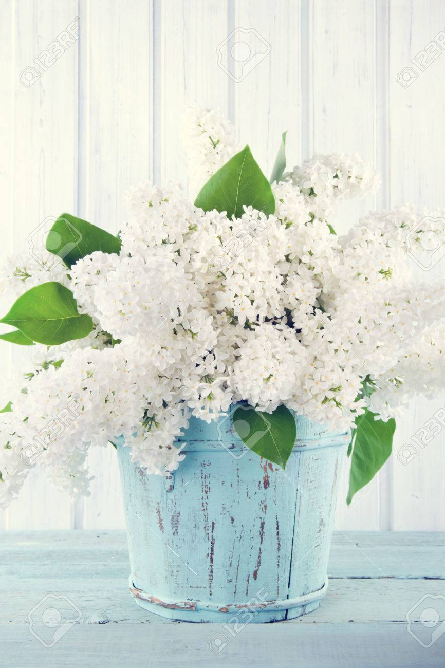 Bouquet of white lilac flowers in a wooden blue vase on light bouquet of white lilac flowers in a wooden blue vase on light shabby chic background stock mightylinksfo