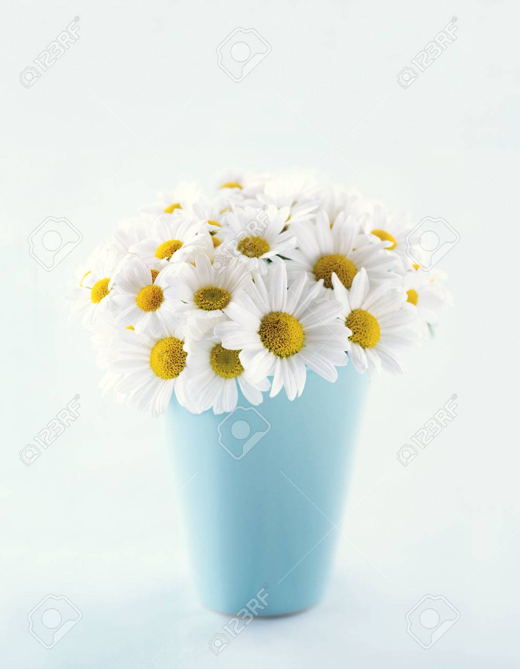 Bouquet Of Daisy Flowers In A Blue Vase On Light Blue Pastel Stock Photo Picture And Royalty Free Image Image 38719346
