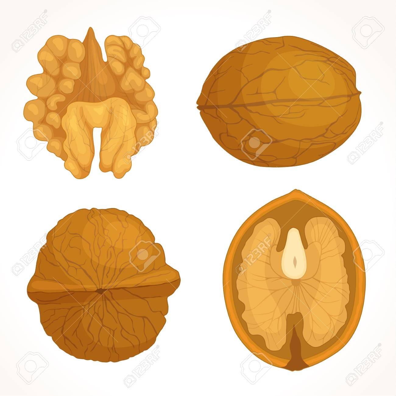Walnut vector. Half, whole, shell and core of walnut. Detailed illustration in the cartoon style. - 91268000