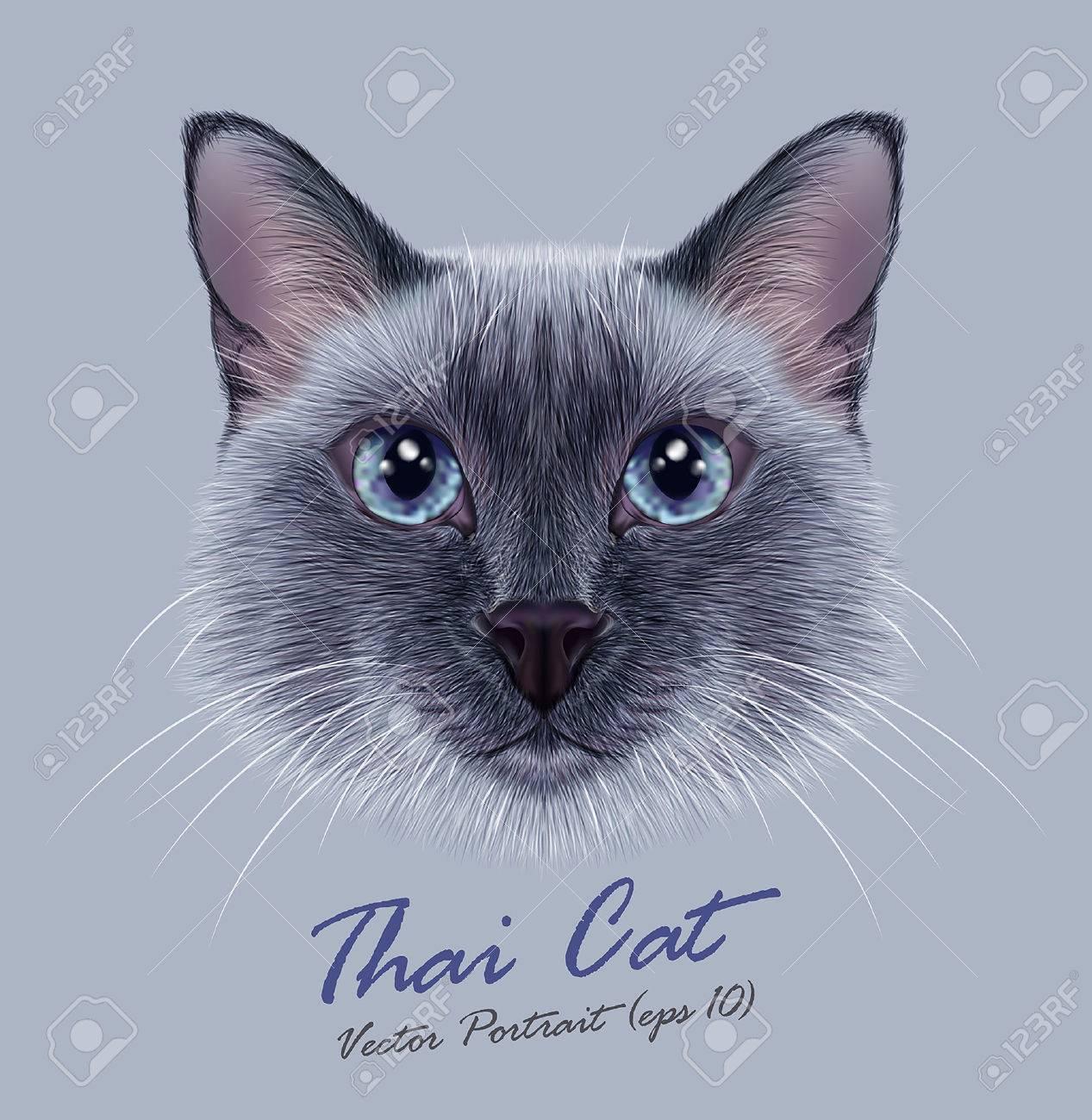 タイ猫のベクター イラスト肖像画かわいいブルー ポイント伝統的な