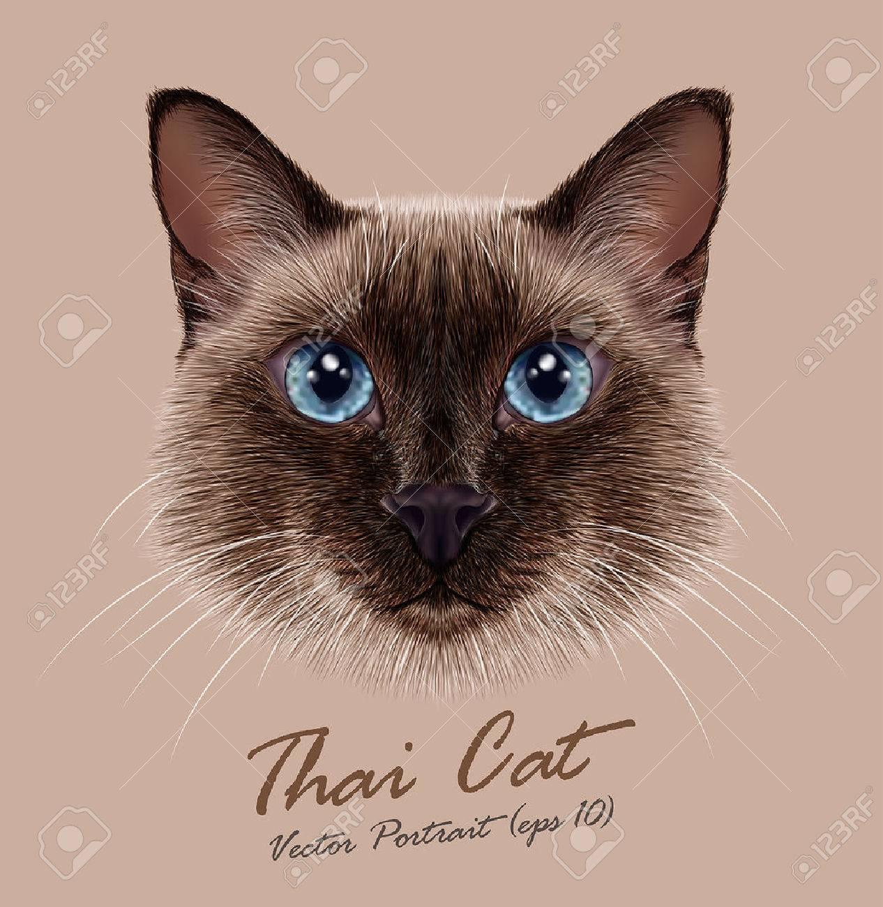 タイ猫のベクター イラスト肖像画かわいいシールは伝統的なシャム猫