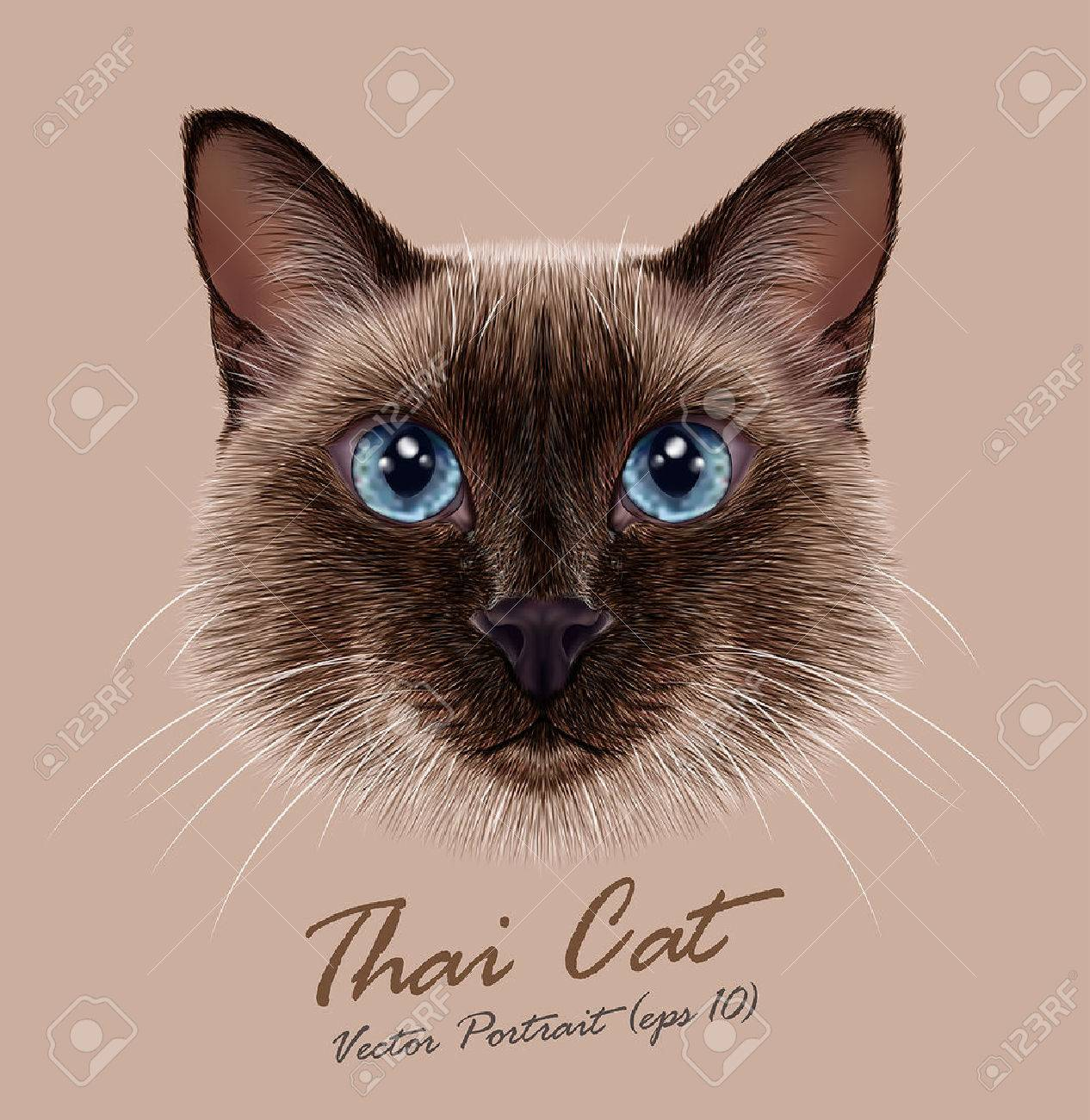 Siamese Cat Stock s & Royalty Free Siamese Cat