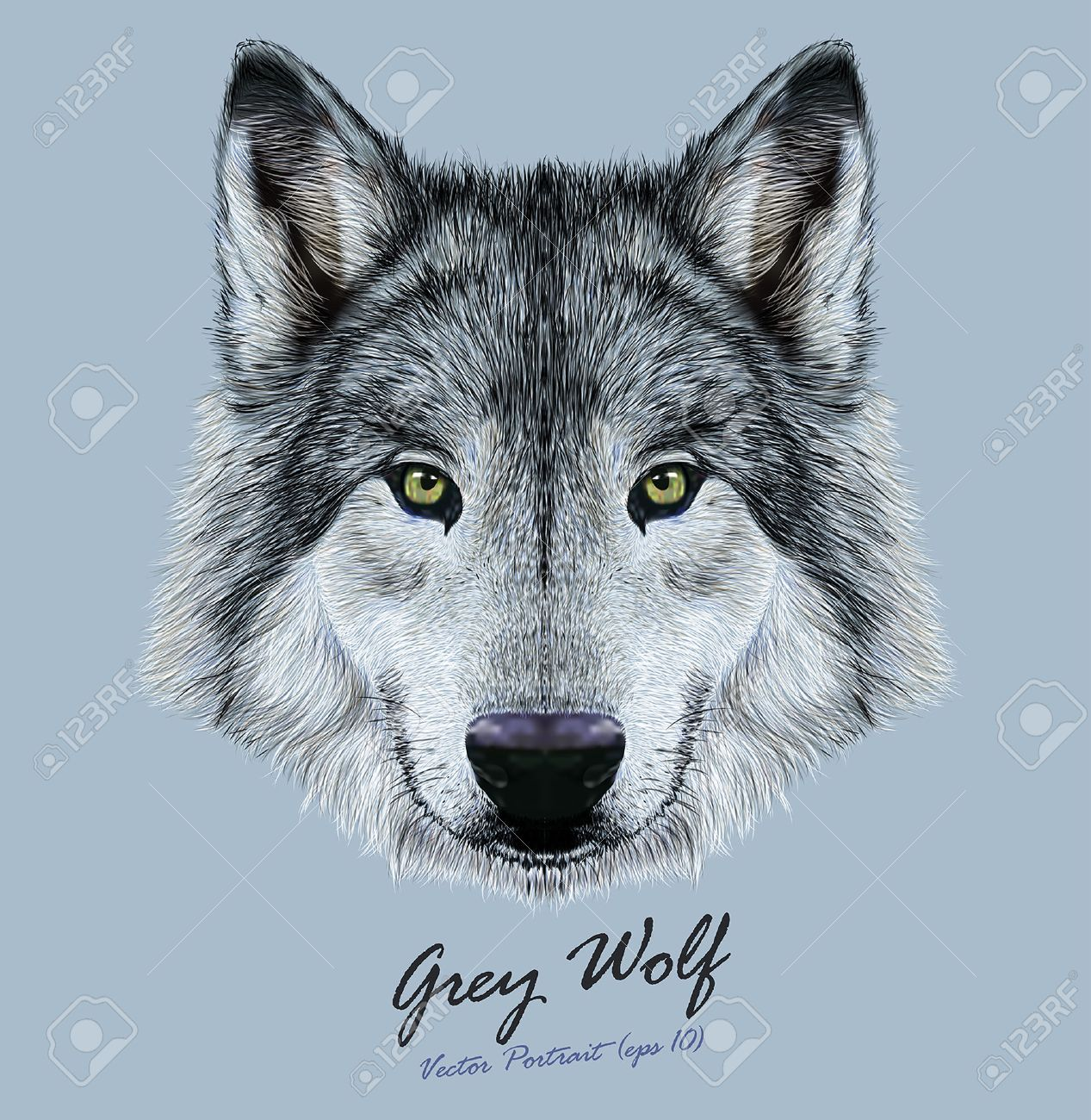 Vector Illustrative Portrait of Wolf. Beautiful gazing face of Gray Wolf with green eyes. - 44302972