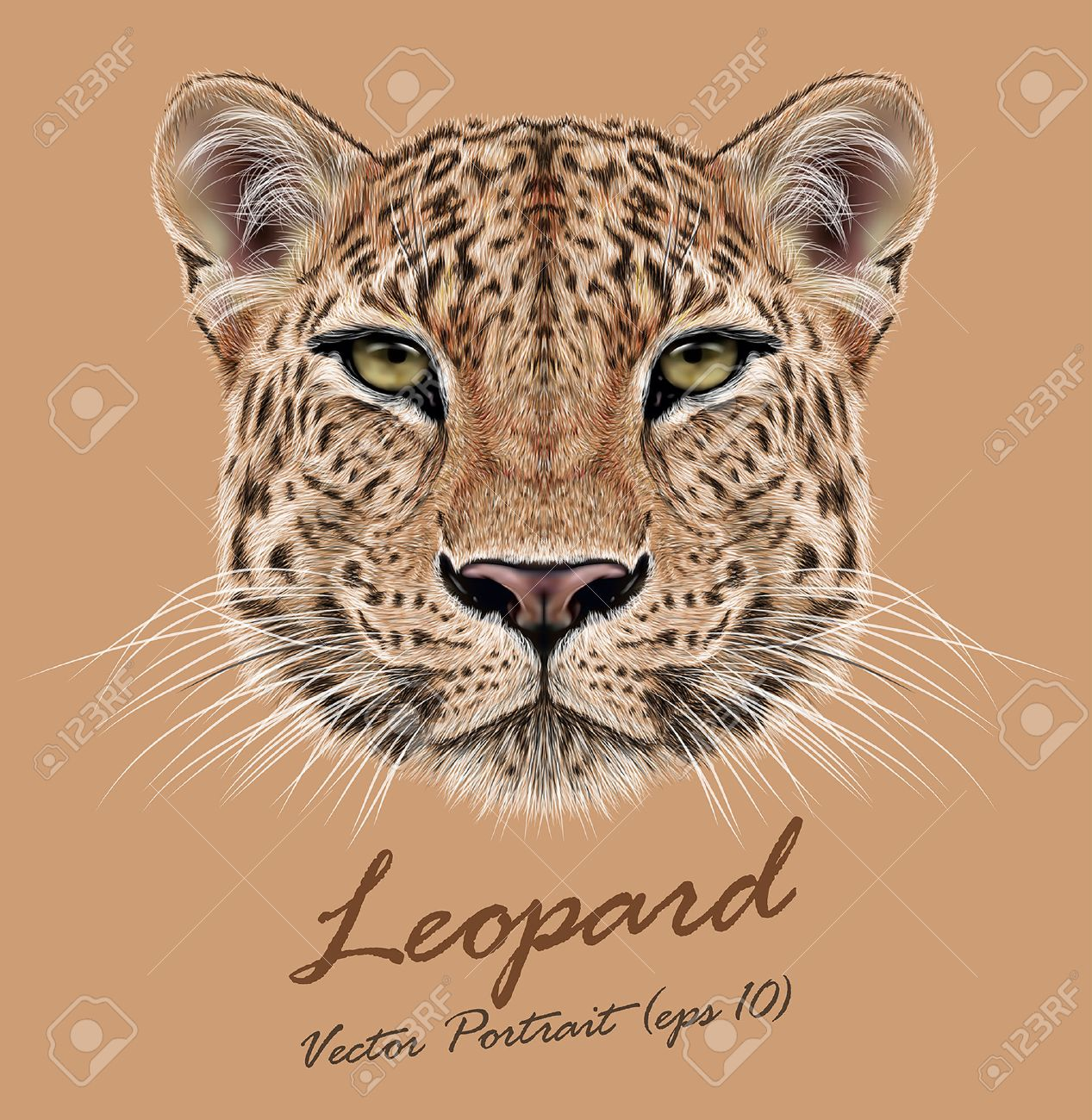 Set with africa animals black white stock vector 169 insima - Guepardo Vector Ilustrativa Retrato De Leopardo Cara Linda Del Leopardo Africano
