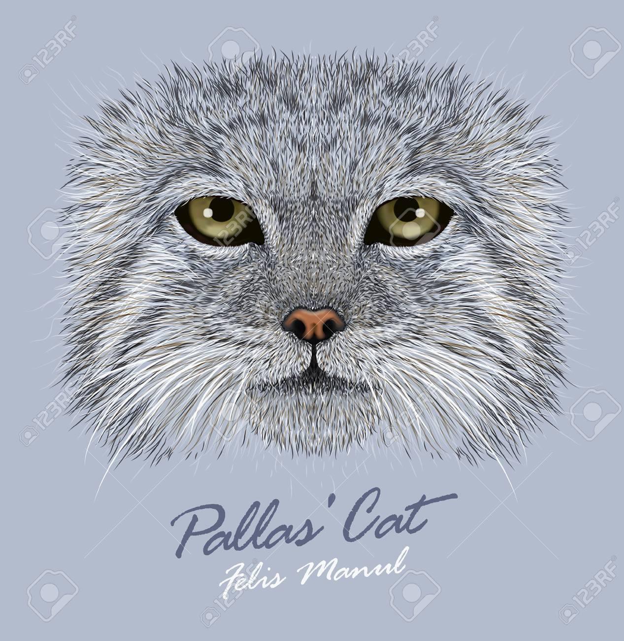 マヌルネコ猫のベクトルの肖像冬の Pallas 猫野生の猫のイラスト