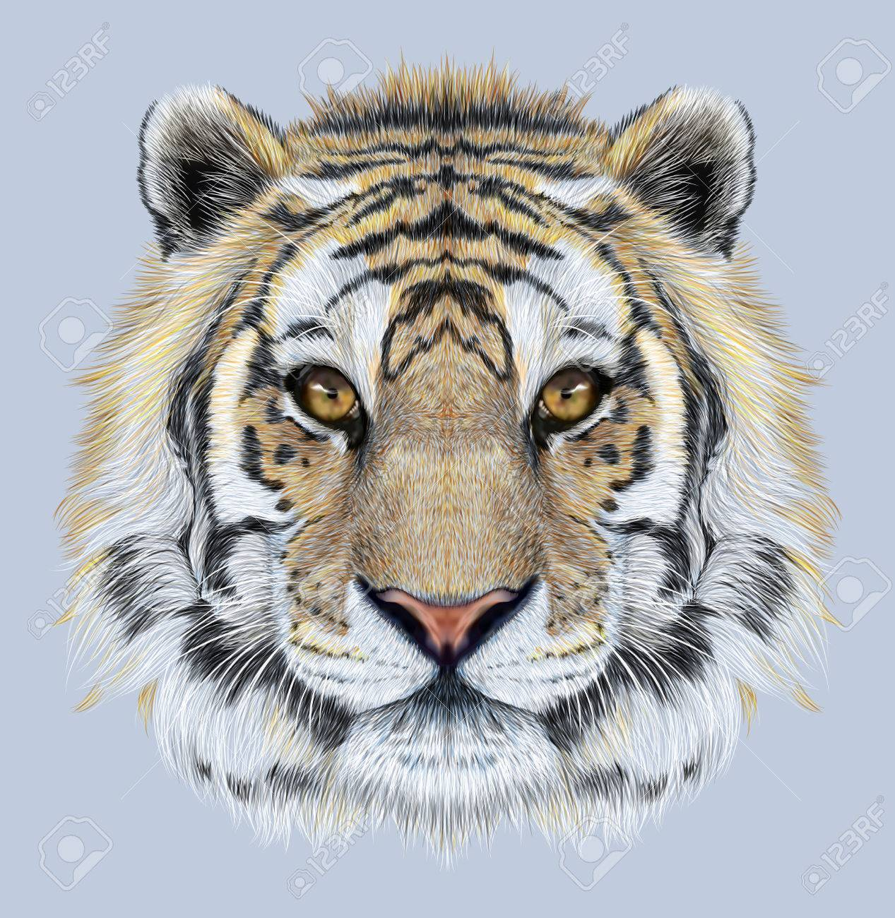 portrait of a tiger on blue background. beautiful face of big