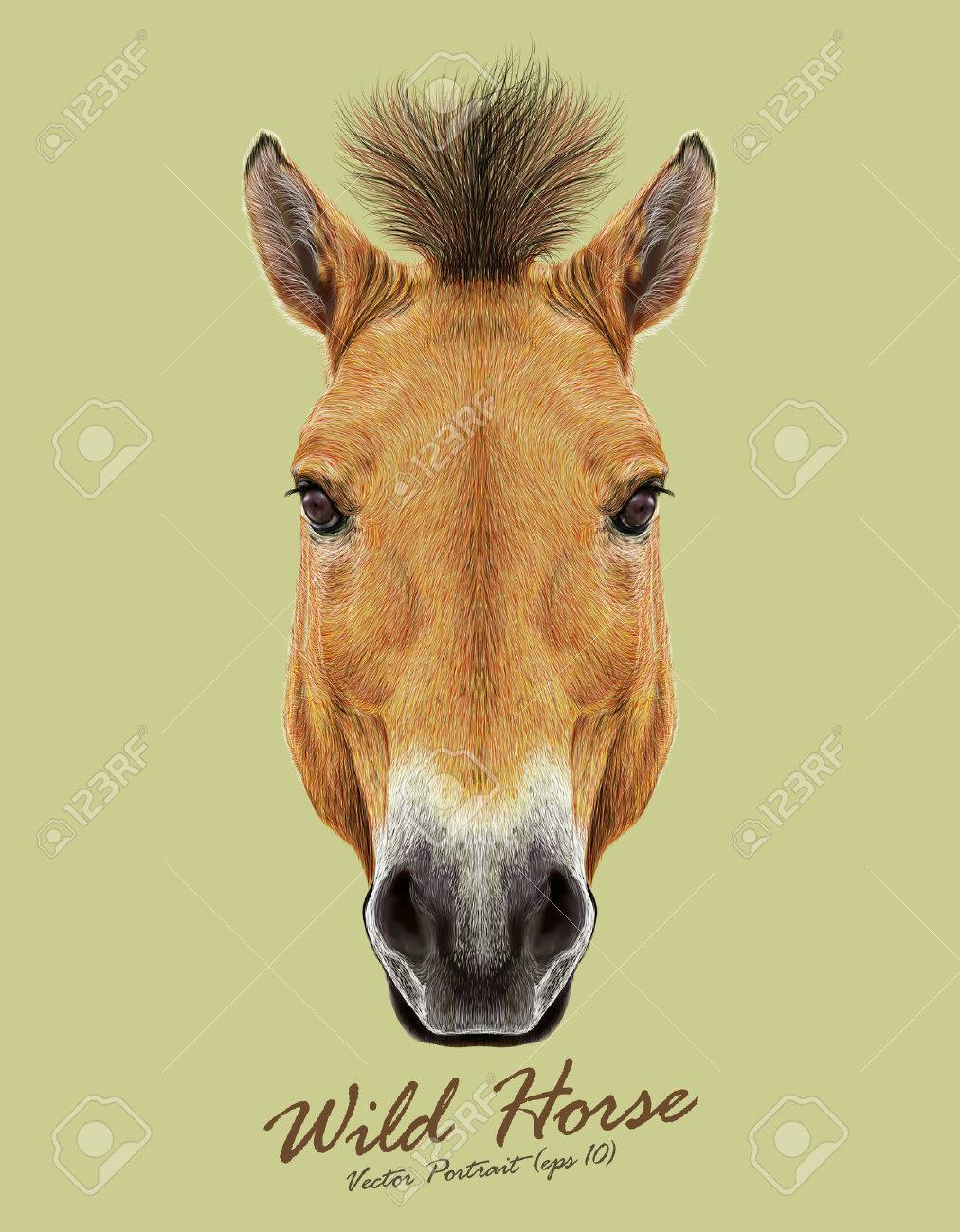 Head of Przewalski's horse. Wild Horse of Central Asia. - 46875632