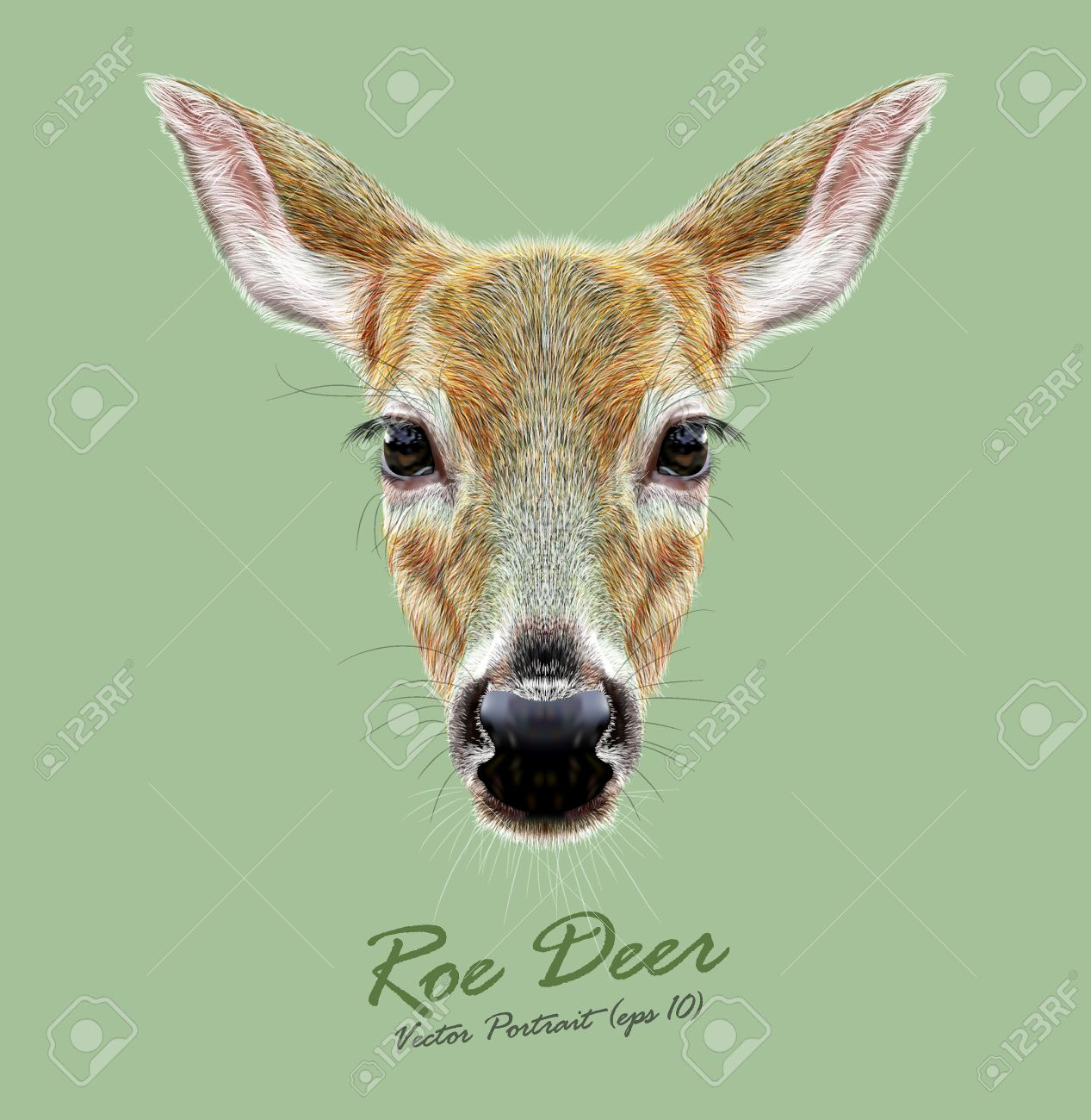 Whitetail Buck Jumping Clipart