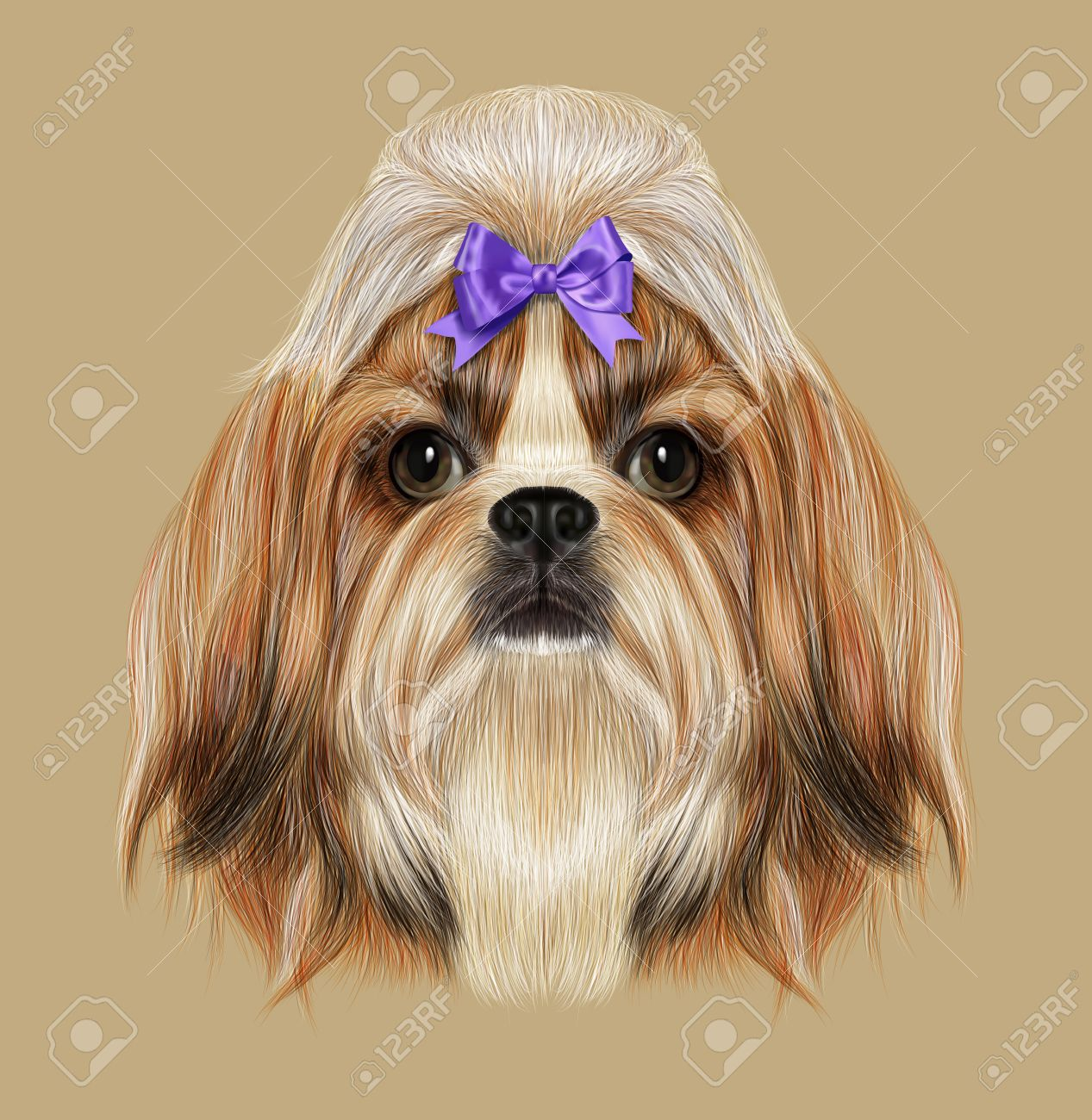 Illustrated Portrait Of Shih Tzu Dog Domestic Toy Dog Breed