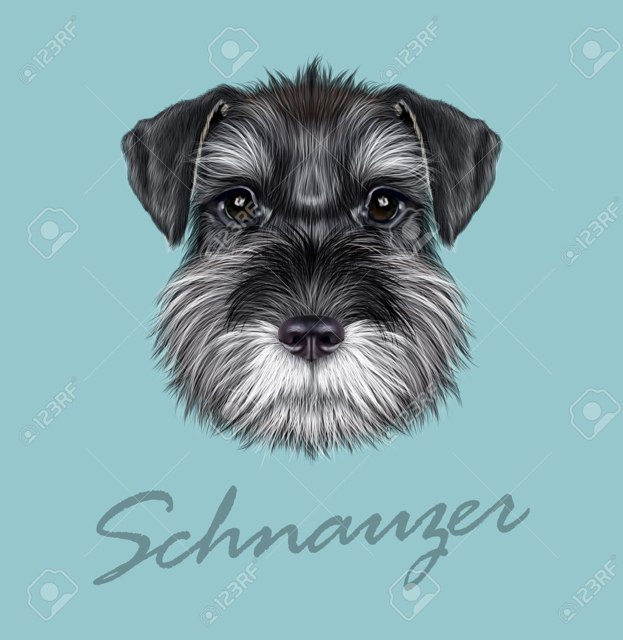 Vector illustrated Portrait of Black Schnauzer on blue background. - 51561889
