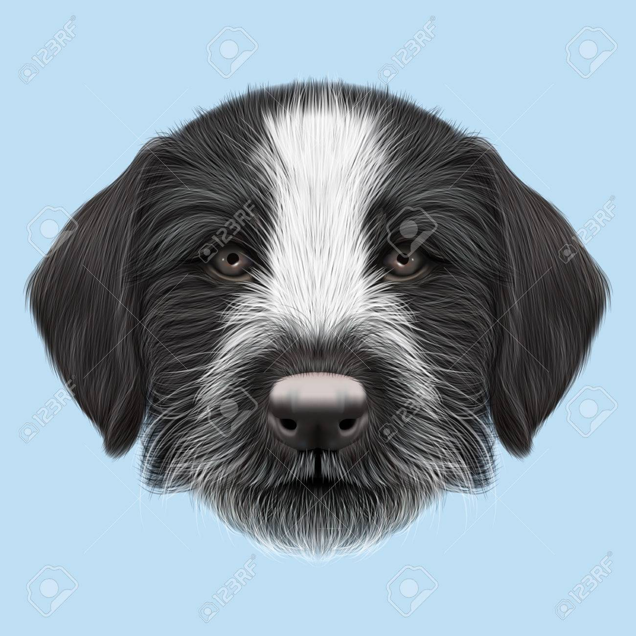 Illustrated Portrait Of German Wirehaired Pointer Puppy. Cute ...