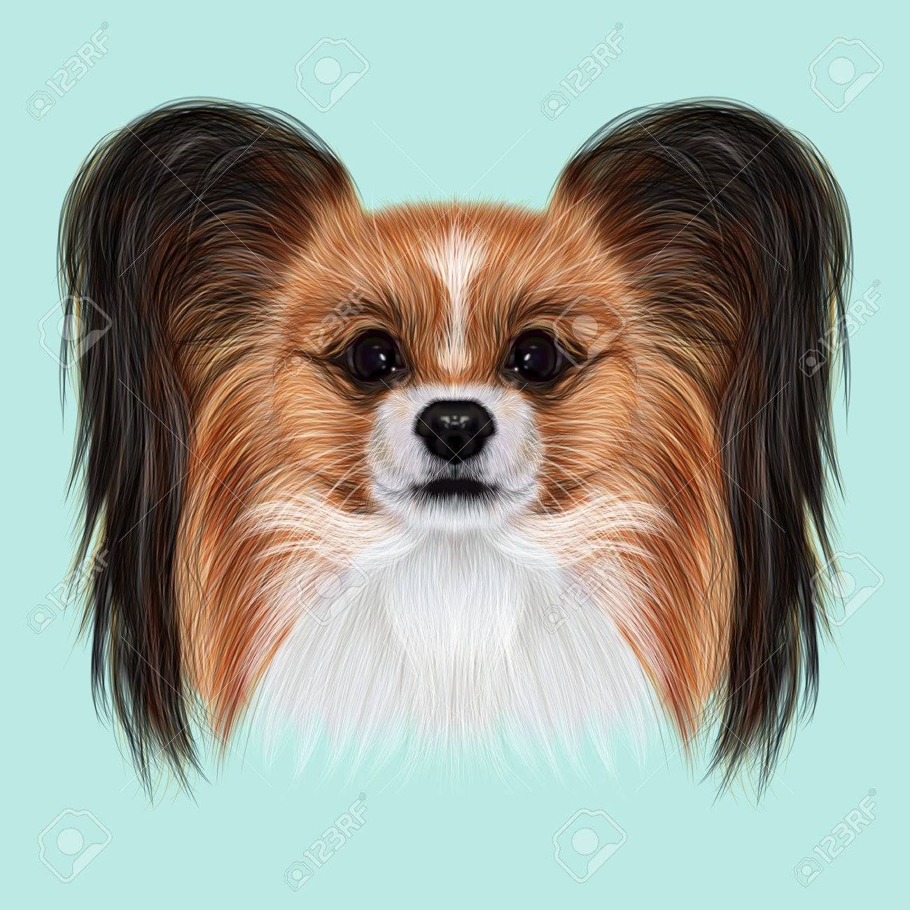 illustrated portrait of papillon dog cute fluffy face of