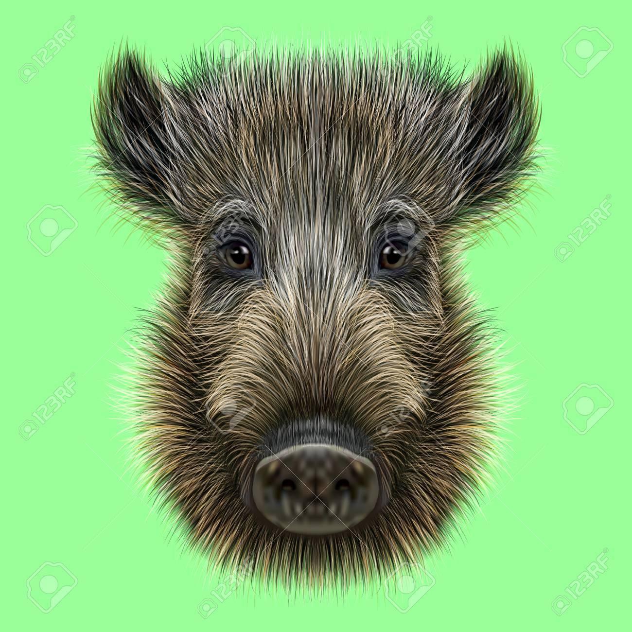 Ilustrada De Jabalí. Formidable Cara De Cerdo Salvaje En El Fondo ...