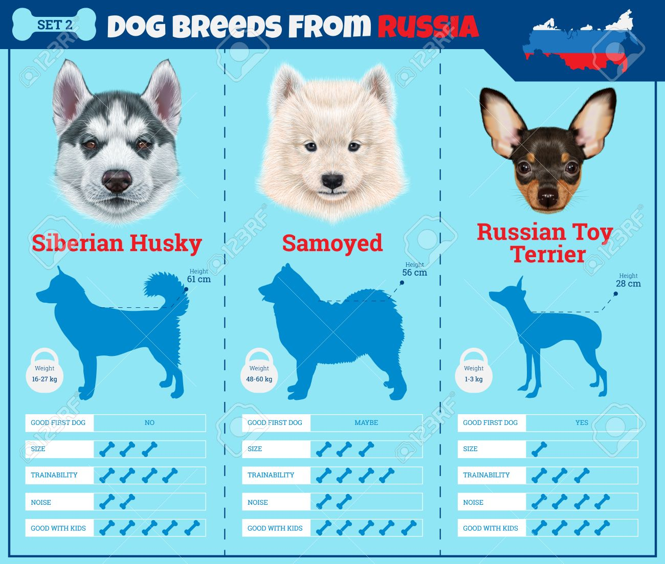 Dogs breed vector infographics types of dog breeds from russia dogs breed vector infographics types of dog breeds from russia breed set 2 siberian voltagebd Image collections